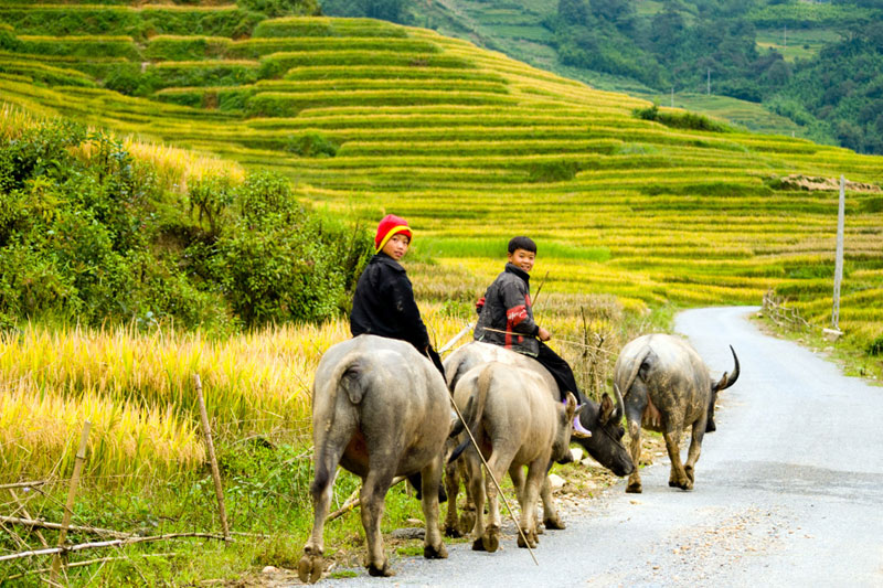 Sapa Tour by Limousine Sharing 2Days - 1Night (Recommended)