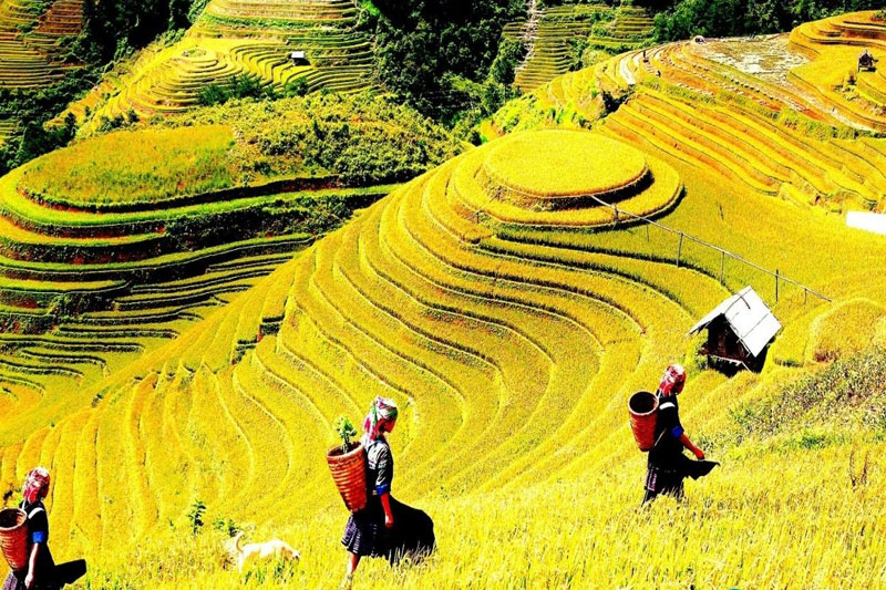 Sapa easy trek 3 days 4 nights  (Hotel & Homestay)